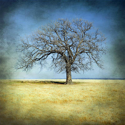 Photograph - Lone Tree by Mike Irwin