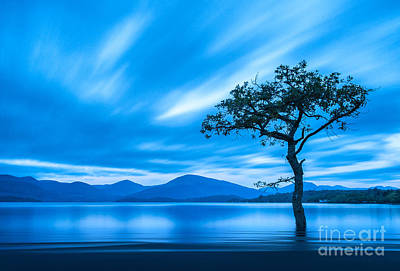 Autumn Landscape Photograph - Lone Tree Milarrochy Bay by Janet Burdon