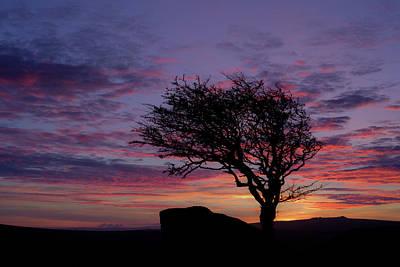 Photograph - Lone Tree Near Holwell Tor On Dartmoor by Pete Hemington