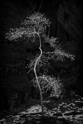 Zion National Park Photograph - Lone Tree by Niall Whelan
