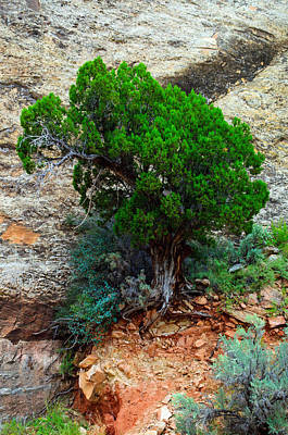 Photograph - Lone Tree On A Cliff by Tikvah's Hope