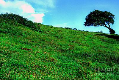 Lone Tree On Hill  Art Print by Thomas R Fletcher