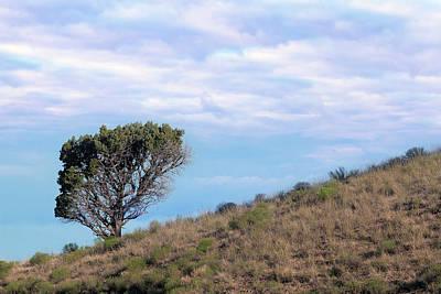 High Desert Photograph - Lone Tree On Hillside In Central Oregon High Desert by David Gn