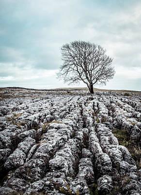 Photograph - Lone Tree On Limestone Pavement Near Malham Cove by Kelvin Trundle
