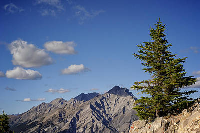 Photograph - Lone Tree On Sanson Peak by Mary Lee Dereske
