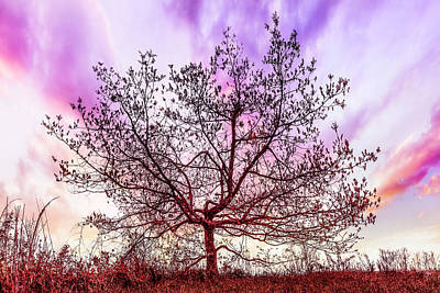 Photograph - Lone Tree On The Hill by Debra and Dave Vanderlaan