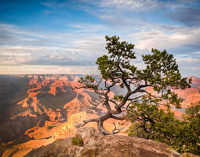Photograph - Lone Tree Over Grand Canyon  by Rikk Flohr