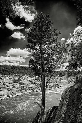 Photograph - Lone Tree by Paul Seymour