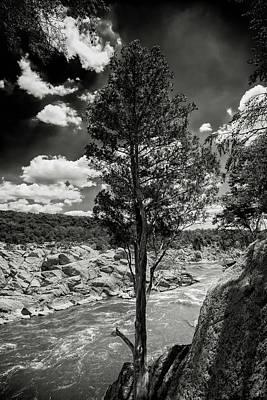 Photograph - Lone Tree by Paul Seymour
