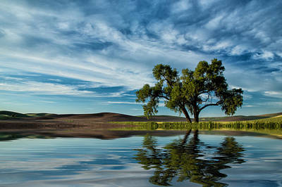Photograph - Lone Tree Pond Reflection by Bob Cournoyer