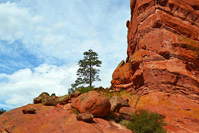 Photograph - Lone Tree Red Rocks Park Colorado - Photography by Ann Powell