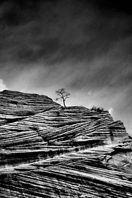 Sky Photograph - Lone Tree Rid by Sarah-jane Laubscher