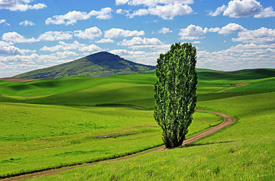 Photograph - Lone Tree - Road - Steptoe Butte by Nikolyn McDonald