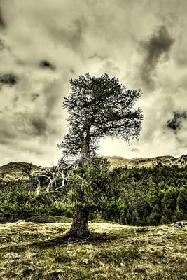 Photograph - Lone Tree by Roberto Pagani