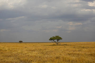 Photograph - Lone Tree Serengeti 2 by Kathy Adams Clark