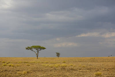 Photograph - Lone Tree Serengeti by Kathy Adams Clark