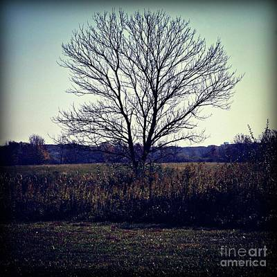 Frank J Casella Royalty-Free and Rights-Managed Images - Lone Tree Silhouette in Field - Color Square by Frank J Casella