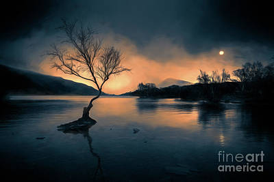 Photograph - Lone Tree Snowdonia by Adrian Evans