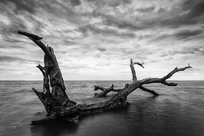 Photograph - Lone Tree by Stefan Mazzola