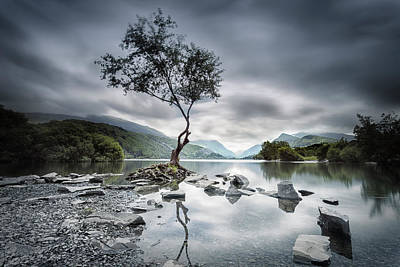Photograph - Lone Tree by Steve Caldwell