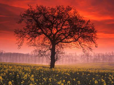 Lone Tree Sunrise Art Print by John Perriment