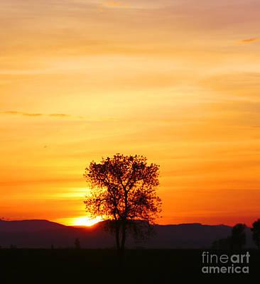 Lone Tree Sunset Art Print by Nick Gustafson
