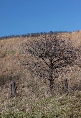 Photograph - Lone Tree by Suzanne Gaff