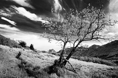 Photograph - Lone Tree by Tim Newton