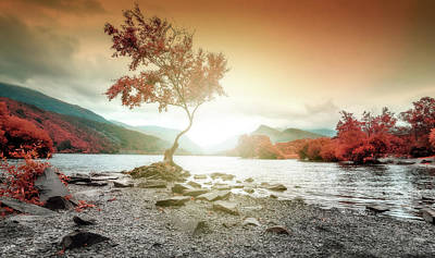 Photograph - Lone Tree Wales Llyn Pardarn, Llanberis by John Williams