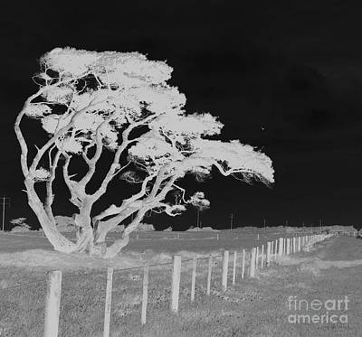 Digital Art - Lone Tree, West Coast by Nareeta Martin