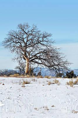 Photograph - Lone Tree Winter Scene by Gabriele Pomykaj