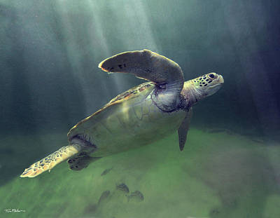 Photograph - Lone Turtle by Tim Fitzharris
