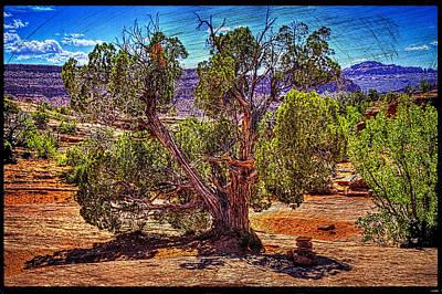 Photograph - Lone Utah Juniper by Roger Passman