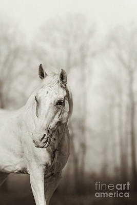 Photograph - Lone White Wild Horse by Dimitar Hristov