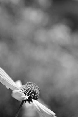 Photograph - Lone Wildflower Black And White by Jill Reger