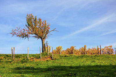Photograph - Lonely Apple Tree In The Countryside by Helissa Grundemann