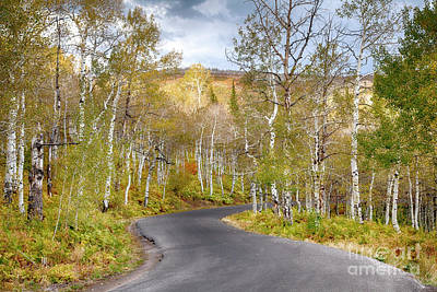 Photograph - Lonely Aspen by David Millenheft