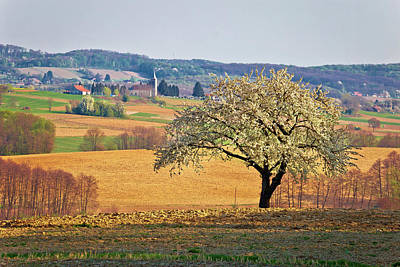 Photograph - Lonely Blossom Tree In Prigorje Region Of Croatia by Brch Photography