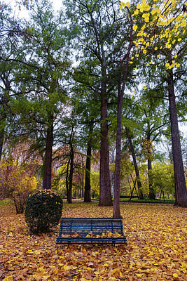 Personalized Name License Plates - Lonely blue bench in autumn by Hans Schrodter