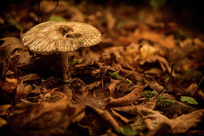 Photograph - Lonely But Fungi by Monte Arnold