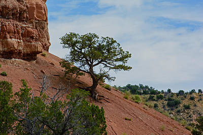 Photograph - Lonely Desert Tree by Tikvah's Hope