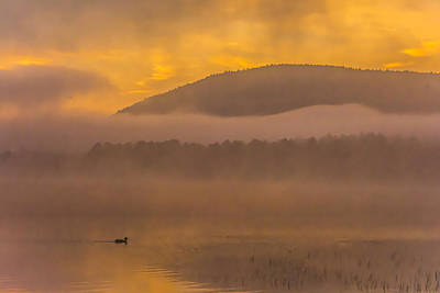 Photograph - Lonely Duck by Francisco Gomez