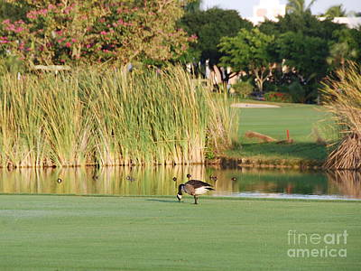 Lonely Goose On The Golf Course Art Print by Jan Daniels