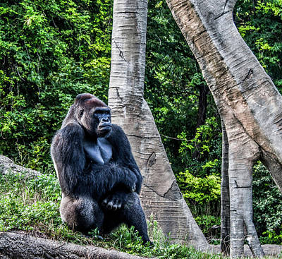 Art Print featuring the photograph Lonely Gorilla by Joann Copeland-Paul