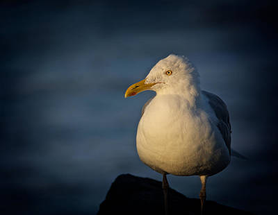 Photograph - Lonely Gull by Kathi Isserman