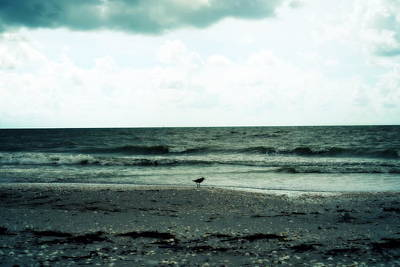 Photograph - Lonely Gull by Laurie Perry