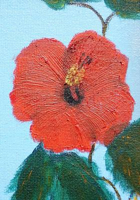 lonely Hibiscus  Art Print by Francis Roberts ll