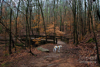 Photograph - Lonely Hound by Barbara Bowen