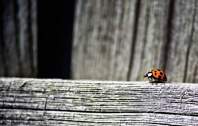 Photograph - Lonely Ladybug by Ms Judi