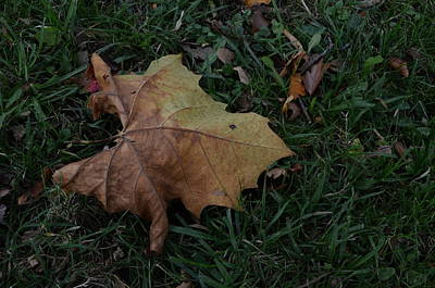 Photograph - Lonely Leaf by Richard Ricci